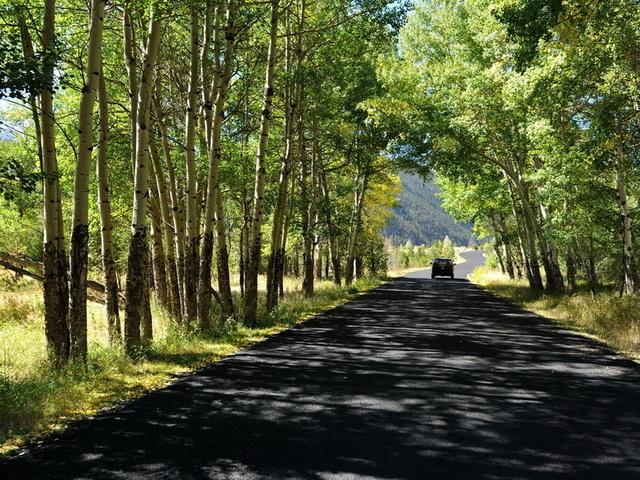 деревья дорога