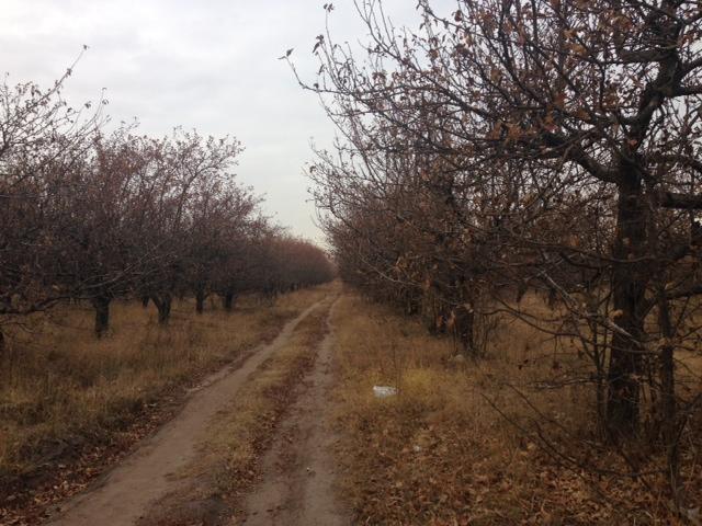 яблоневый сад фото 2