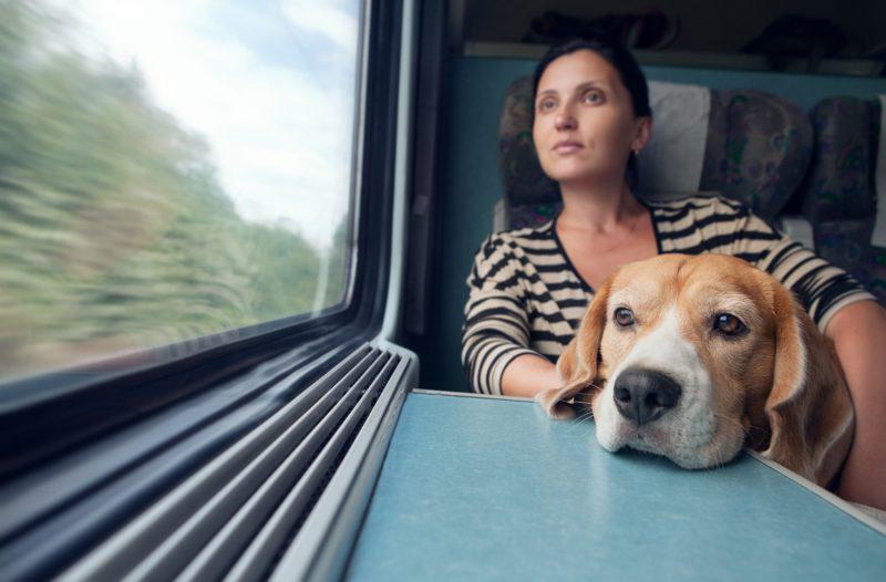 Домашние питомцы будут ездить в поездах без хозяев