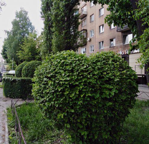 Креативную обрезку кустарников в Ленинском районе показали на фото