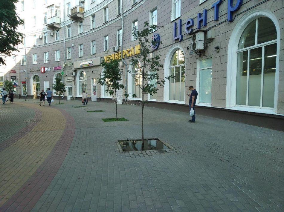 Площадь у воронежского вокзала: голая задница, украденные рябины и депрессия