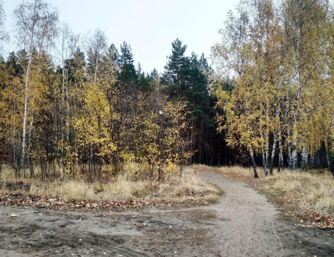 Воронеж лес