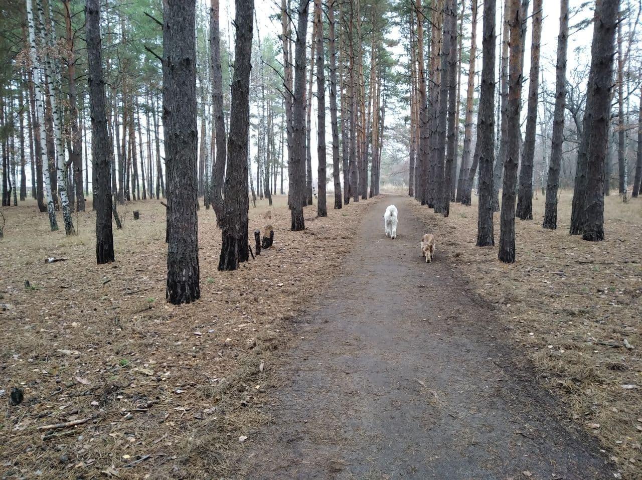 лес Курчатова